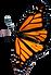 kathleenslodgebutterfly.png