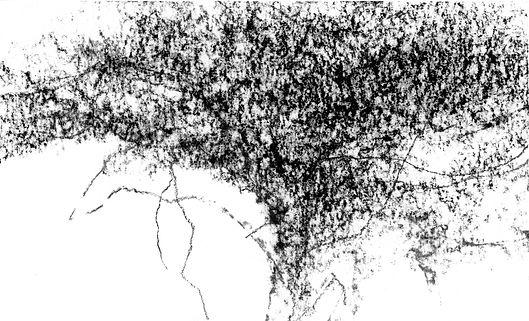 l'arbre-acacia (7), fusain, 2020, 15x25c