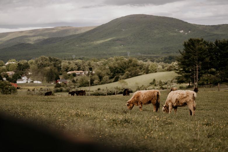 Cyrus Ridge Farm