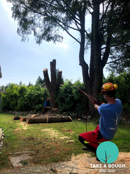 Tree_Removal (1).png