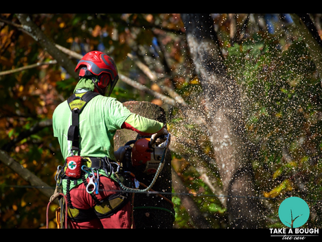 Tree_Removal (6).png