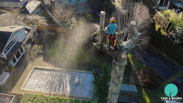 Tree_Removal (2).png