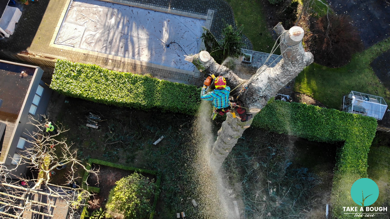 Tree_Removal (4).png