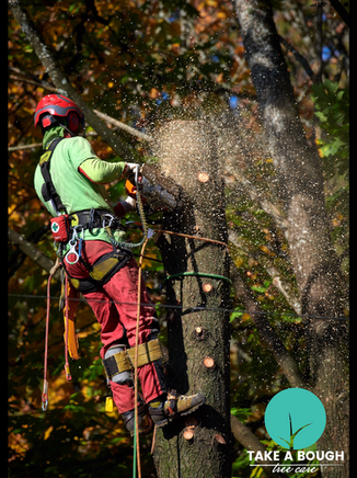 Tree_Removal (7).png