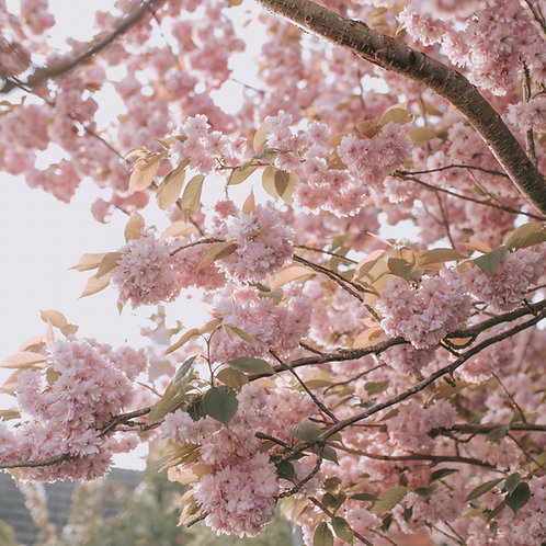 Blooms & Blossoms Mobile Preset