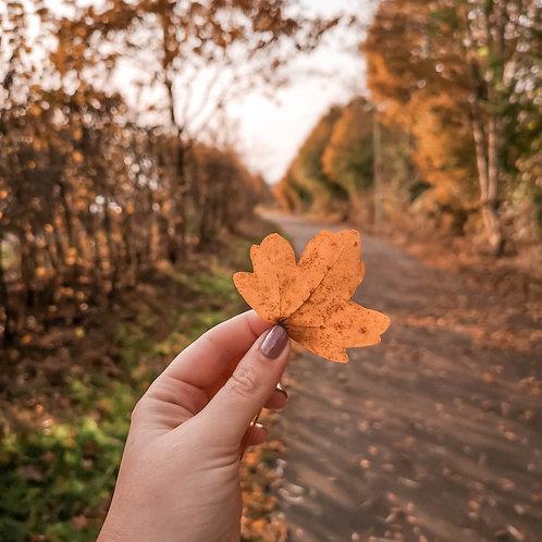 Instant Autumn Mobile Preset