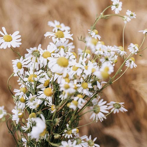 Autumnal White Mobile Preset