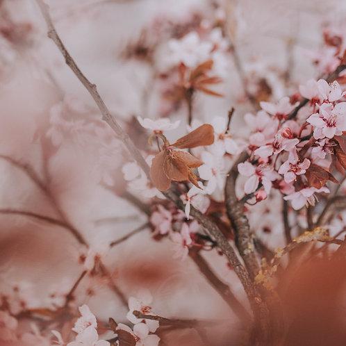Spring Dreams Mobile Preset