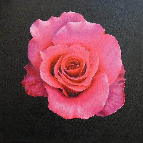 Rose Painting Prints