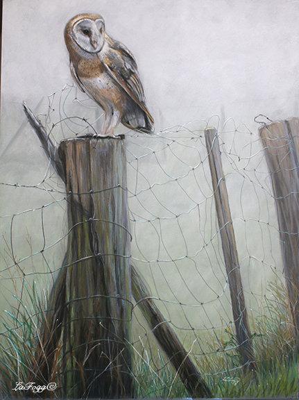 Meadow Watch