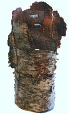 Tree Spirit Vessel-Armor iv
