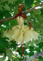 Tree Spirit Ballerina I