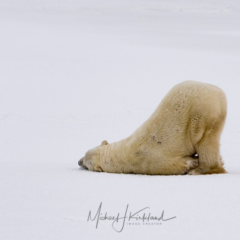 Manatobia, Churchill, Canada