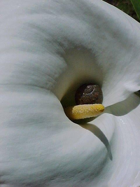 Snailily