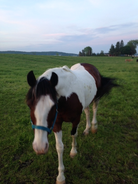 Magic, notre cheval guide