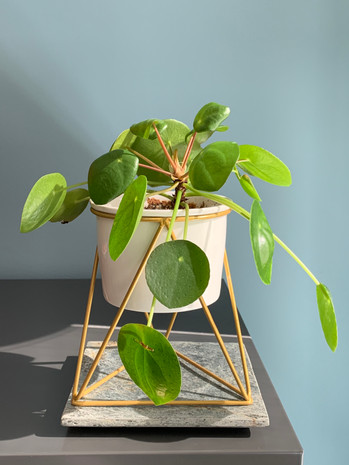 Petite plante du bureau 2