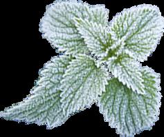 KauX Xylit Kaugummi Wintergreen