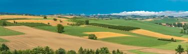 Monferrato Campagna.jpg