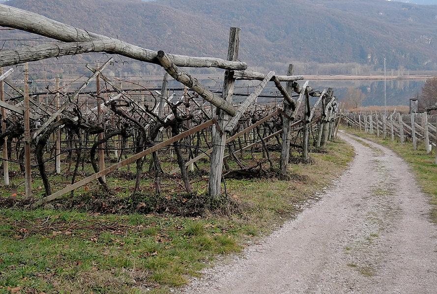 Seeguetl - Weinacker am Kalterer See Kalternin Weinacker am See_klein.jpg