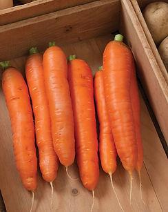 storage carrots.jpg