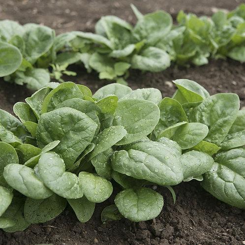 Spinach (4 oz)