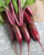 cylindrica beets.jpg
