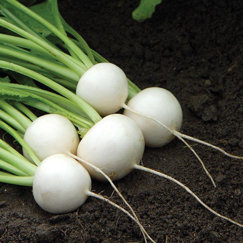 hakurei turnips.jpg
