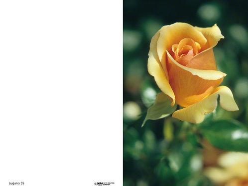 Gelbe Rose-Lugano55 - ab 10 Stück inkl. Druck