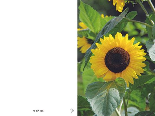 Sonnenblume-EP165 - ab 10 Stück inkl. Druck