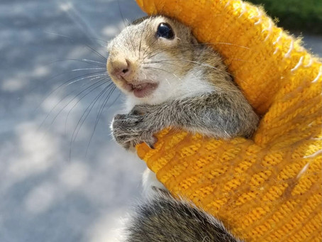 Squirrels in the Attic: Preventing Damage to Your Home
