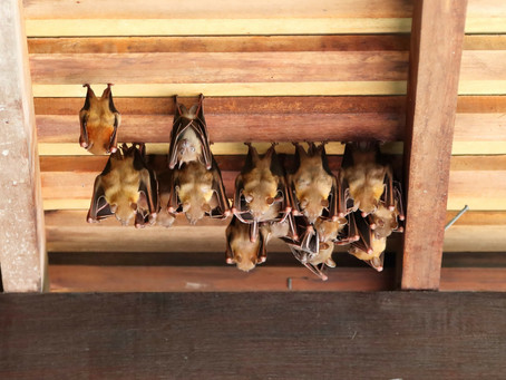 How to Get Rid of Bats in Your Home and Prevent Them From Coming Back