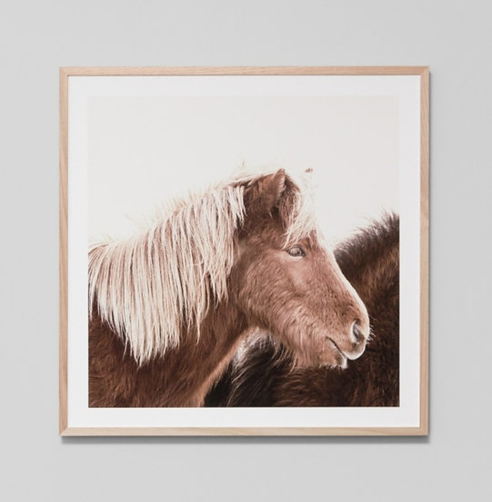 BLONDE PONY GLASS FRAMED PRINT