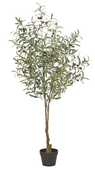 OLIVE TREE 152CM