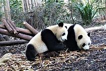 01-HF-Pandabär.jpg