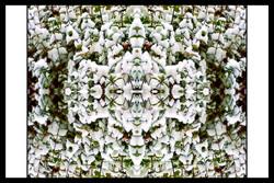SPALTRISME GAMMA HS  35.jpg