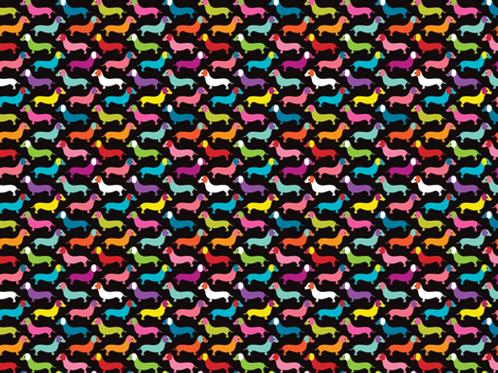 Rainbow Dachshunds