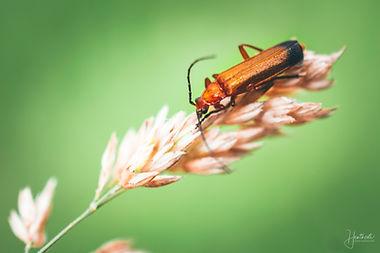 Orange Bug 1.jpg