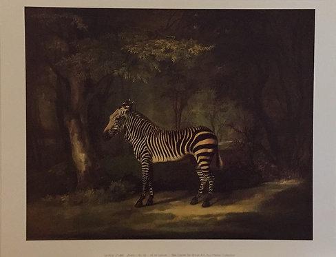 George Stubbs, Zebra
