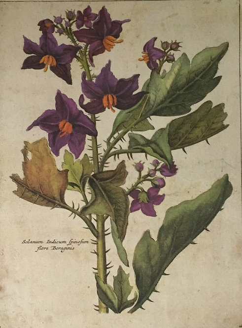 Botanical Print, Plate16