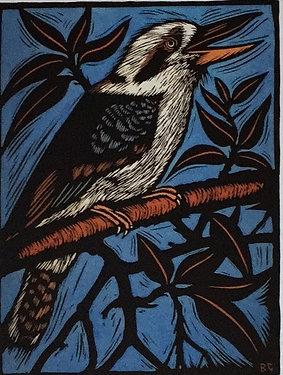 Bruce Goold, Kookaburra