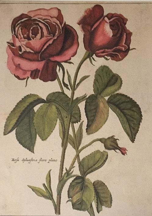 Botanical Print, Plate 14