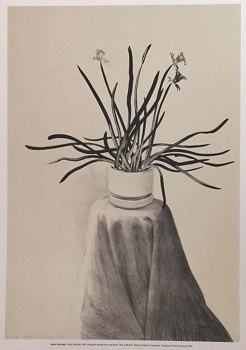 David Hockney, Potted Daffodils