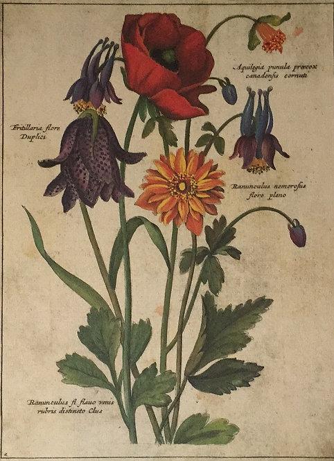 Botanical Print, Plate 13