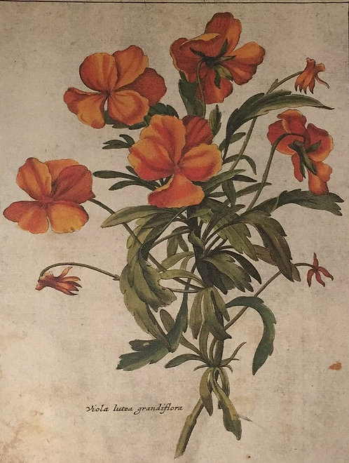Botanical Print, Plate 10