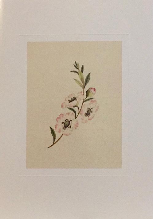 George Raper, Tea Tree