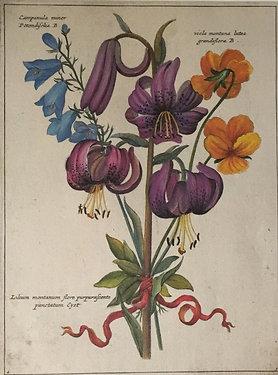 Botanical Print, Plate 3