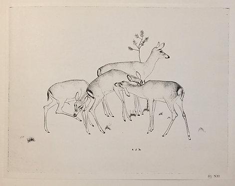 Robert Austin, Deer