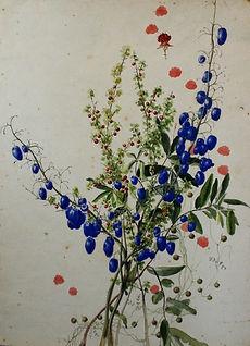 Emma Minnie Boyd, Flower Study (c. 1870s