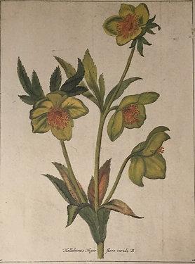 Botanical Print, Plate12