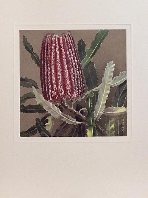 Marian Ellis Rowan, Banksia Menziesii